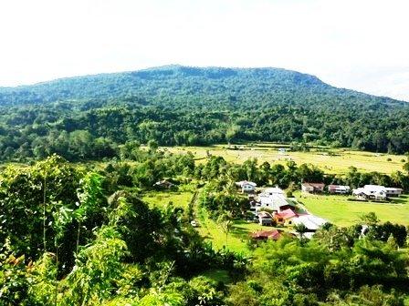 Sawah padi dan Gunung Buduk Balud