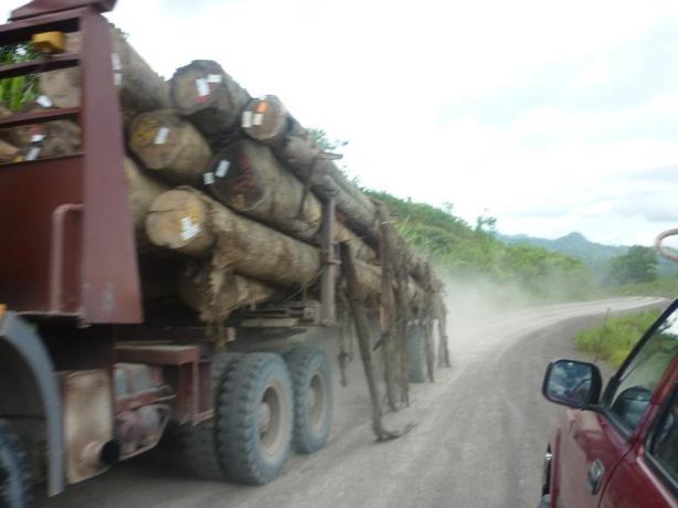 Hasil Dari Hutan (NCR) Kami di Angkut keluar