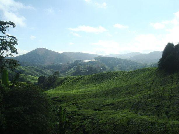 Cameron Highlands, Pahang. Malaysia