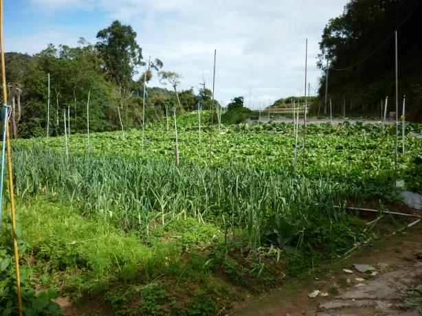 Kabun Sayur