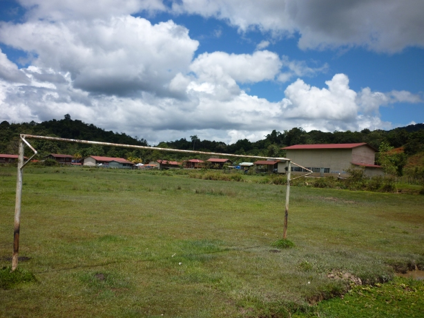 Padang bola sepak berubah menjadi padang ternak kerbau
